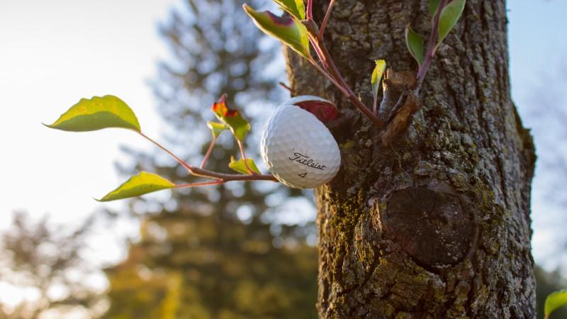 broken golf ball in tree - How Is A Golf Ball Made?