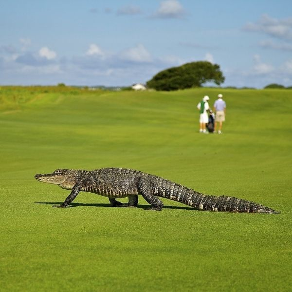 golf everything else - Our Equipment Picks